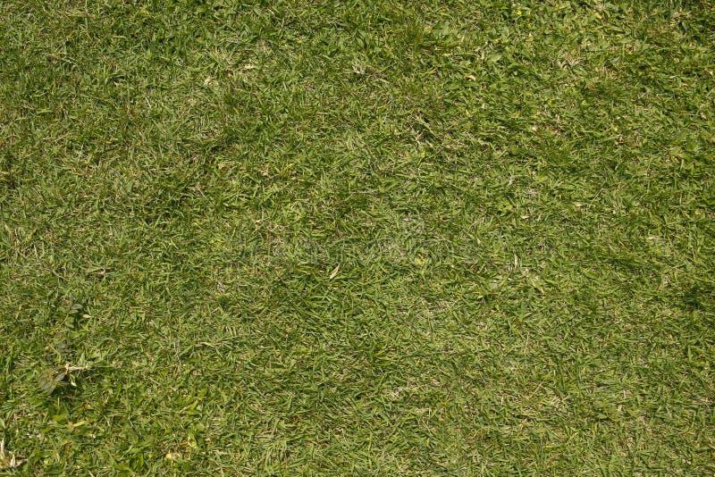 Zielonej trawy t?o obrazy royalty free