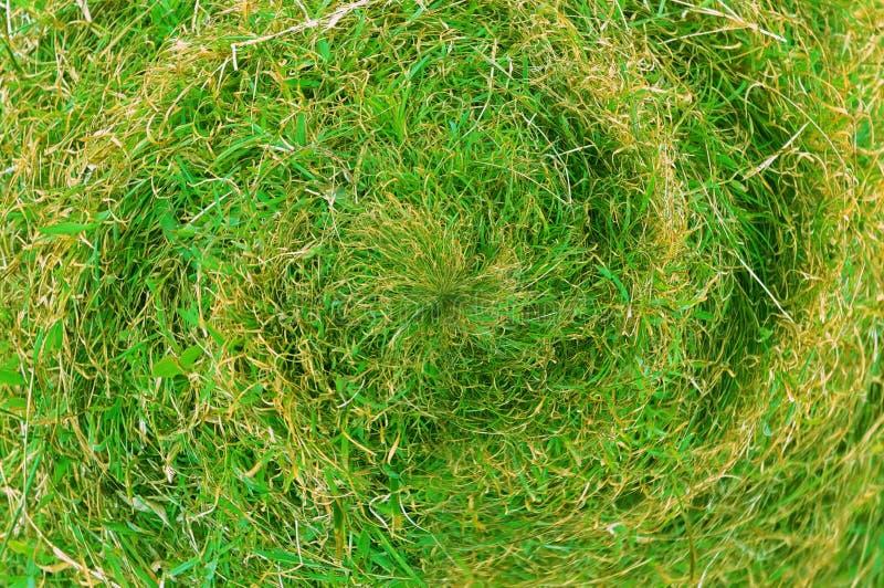 Zielonej trawy tekstura i tło centralizacji kółkowy kształt obrazy royalty free