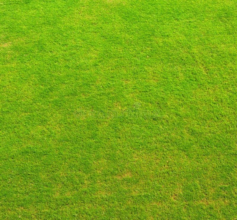 Zielonej trawy tekstura obrazy stock