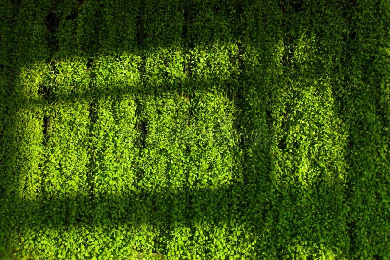 Zielony ściany i cienia cień zdjęcia royalty free