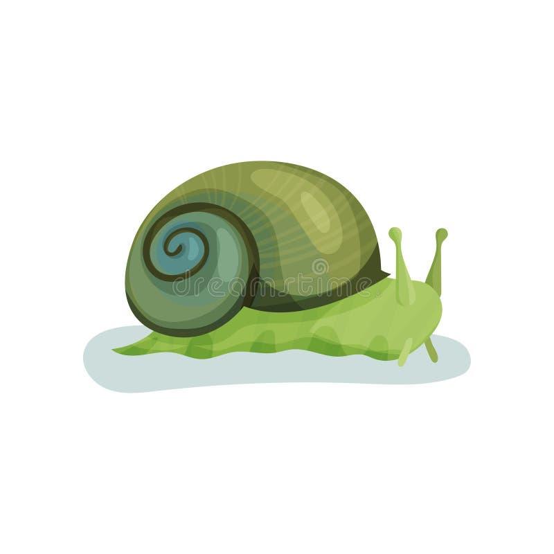 Zielony ślimaczka gastropod mollusk z zielonej skorupy wektorową ilustracją na białym tle ilustracja wektor