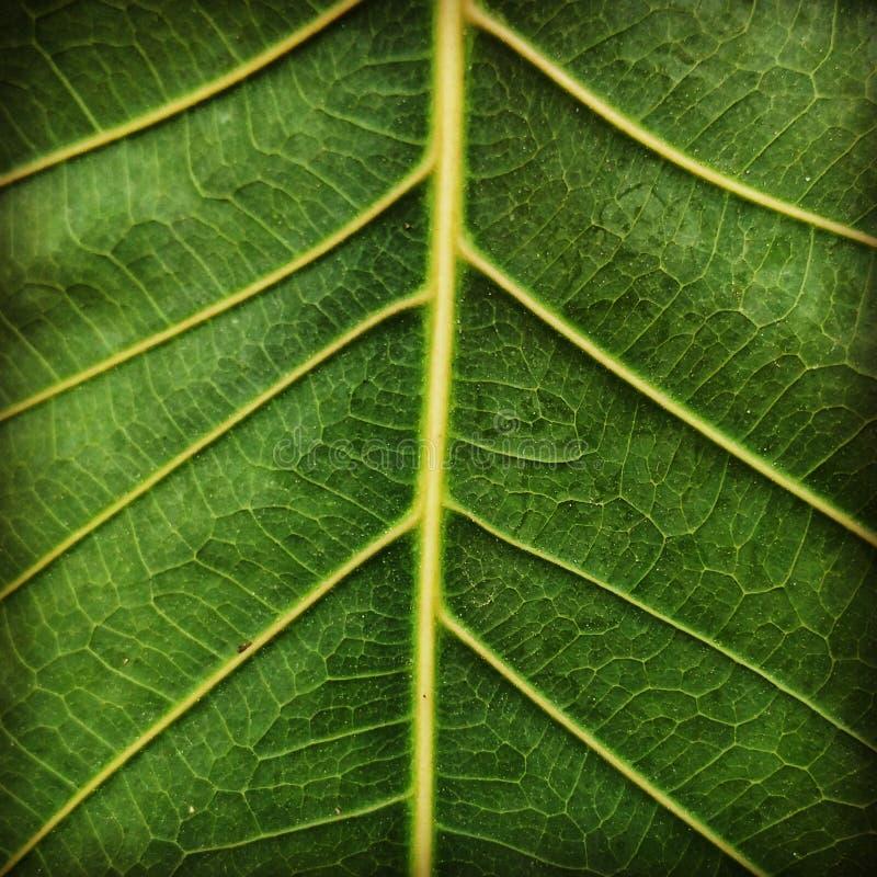 zielony świat obrazy royalty free