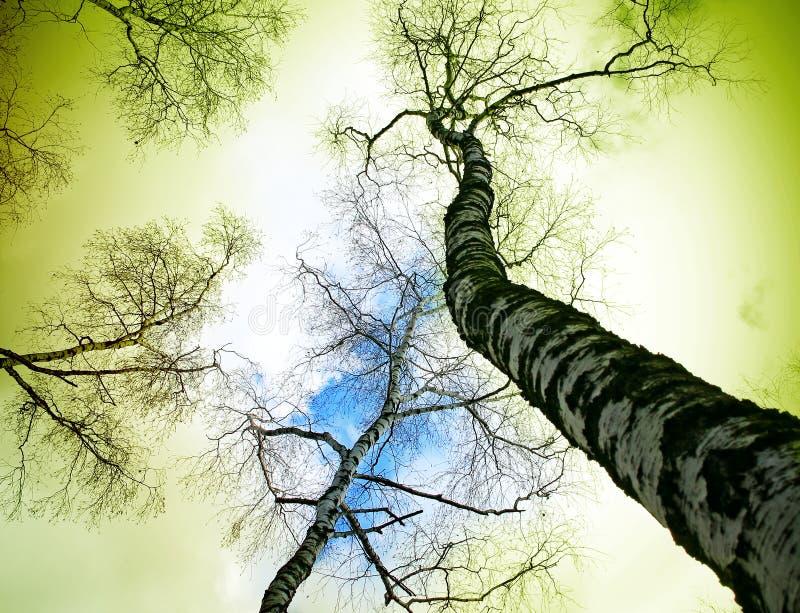 zielony świat obraz royalty free