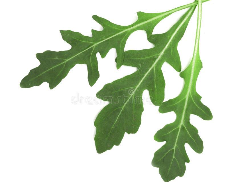 Zielony świeży rucola lub arugula liść odizolowywający na białym tle Odgórny widok zdjęcia royalty free