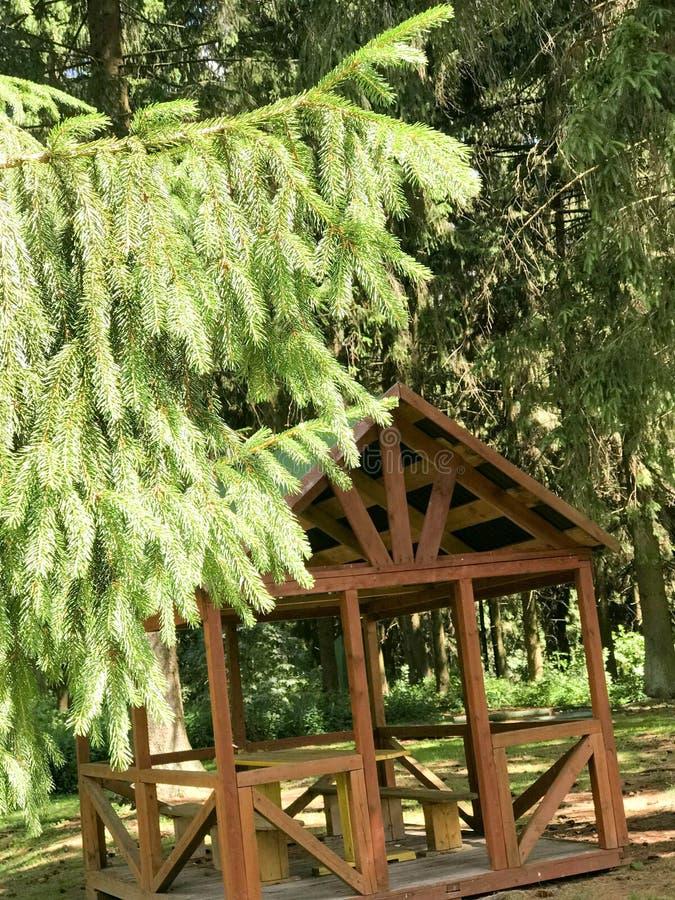 Zielony świerkowej sosny gałąź obwieszenie w powietrzu przeciw brown gazebo, miejsca dla odpoczynku obraz stock
