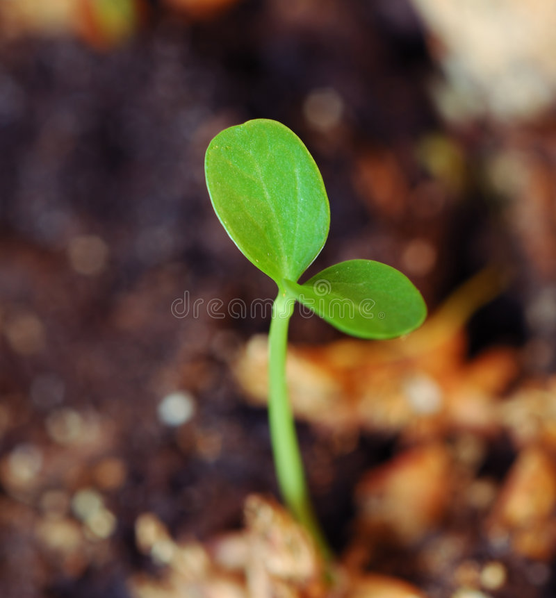zielony życia nowej sprout zdjęcia royalty free