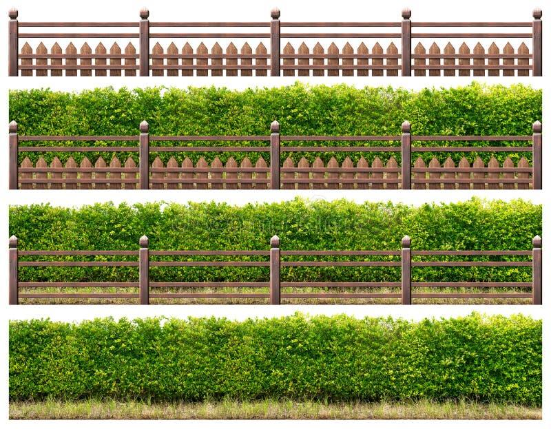 Zielony żywopłot z drewnianym ogrodzeniem obraz stock