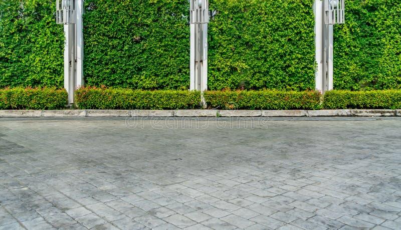 Zielony żywopłotu ogrodzenie zdjęcie stock