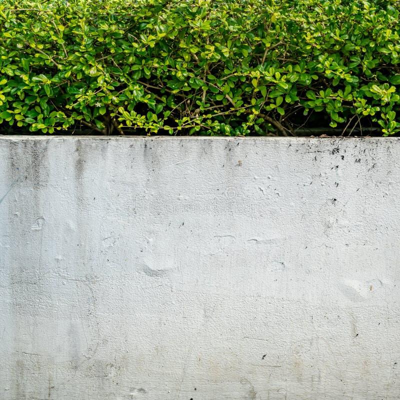 Zielony żywopłotu ogrodzenie zdjęcia stock