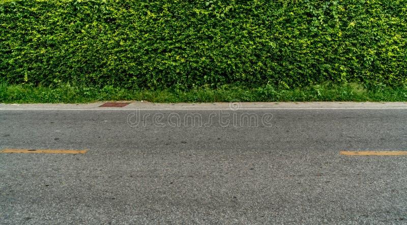 Zielony żywopłotu ogrodzenie obrazy stock