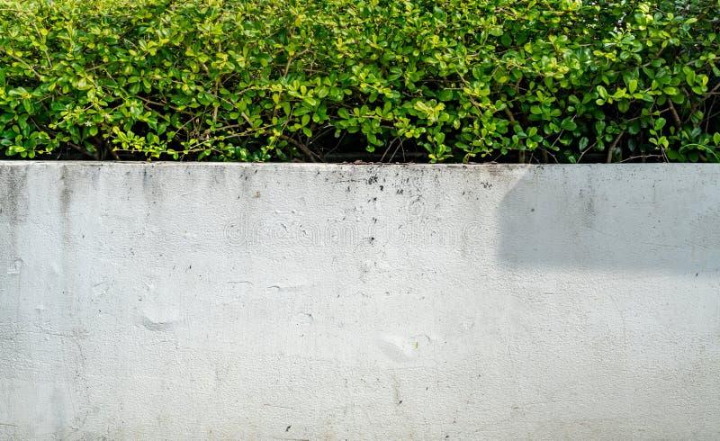 Zielony żywopłotu ogrodzenie obraz royalty free