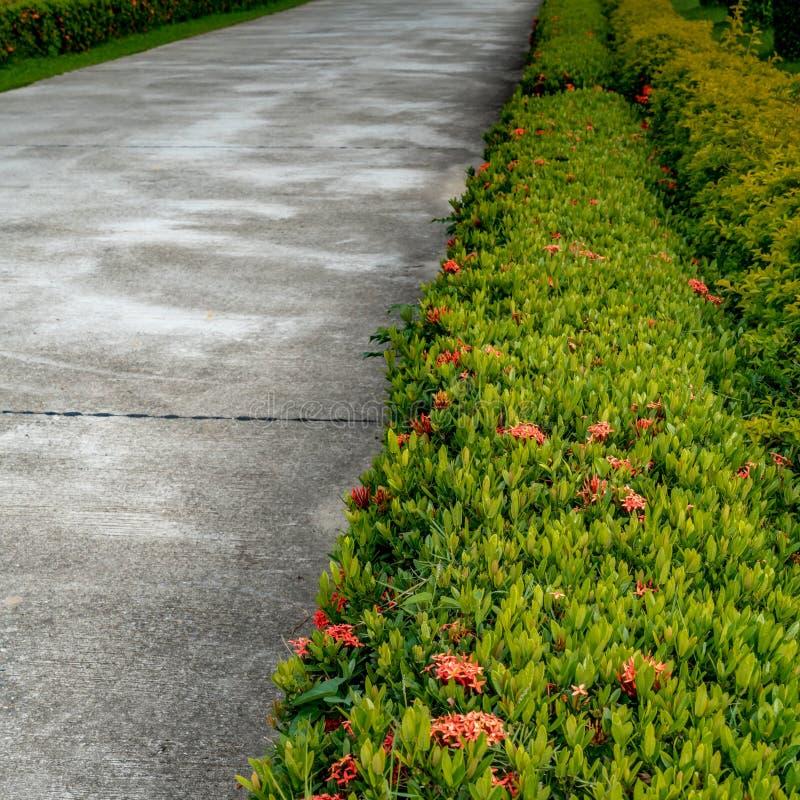 Zielony żywopłotu ogrodzenie zdjęcie royalty free