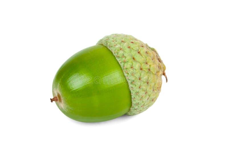 Zielony acorn fotografia royalty free