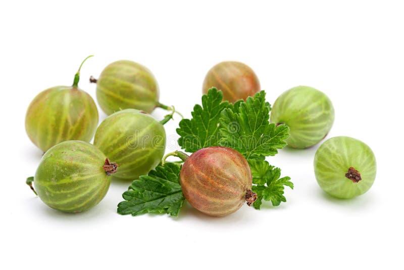 Download Zielony agrest z liściem obraz stock. Obraz złożonej z zbliżenie - 41954511