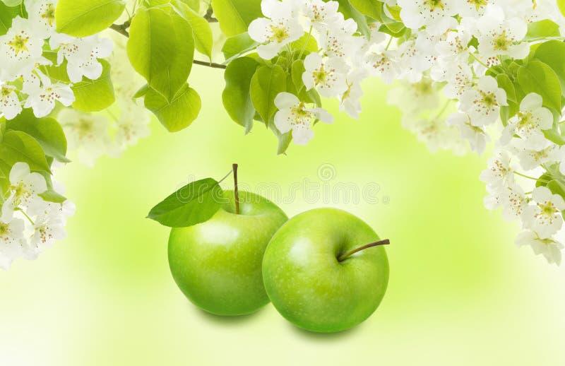 Zielony Apple z liściem, gałąź i wiosną, kwitnie na plamy tle Piękny kolażu projekt dla pakować zdjęcia stock