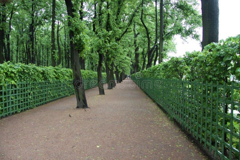 zielony avenue ogrodu zdjęcie stock