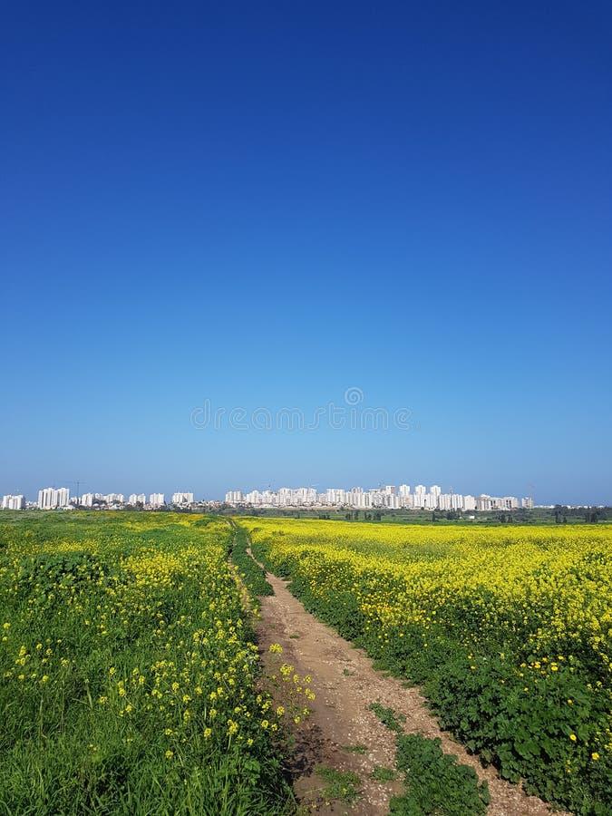 Zielony błękitny kolor żółty obraz stock