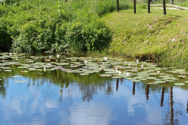 Zielony bagna pustkowie, grąz z krzakami, drzewa i liszaje, zdjęcie royalty free