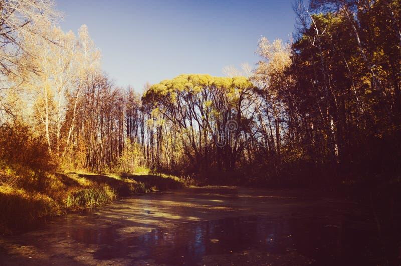 zielony bagno w jesieni moorland w lasowym nieprzejezdnym bagnie obrazy stock