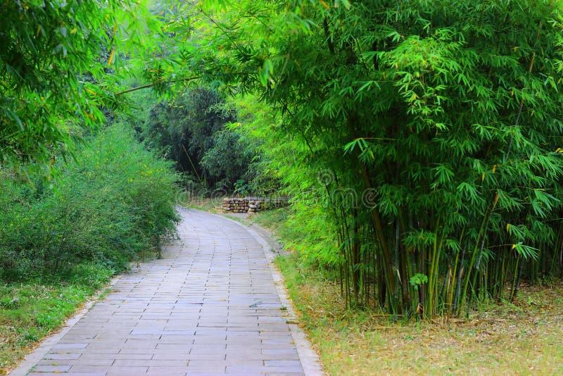 Zielony bambus obraz royalty free