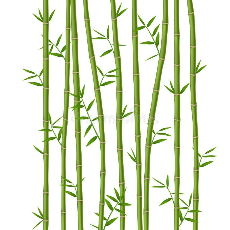 Zielony bambus royalty ilustracja