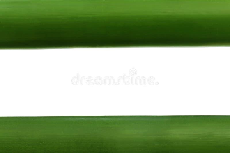 Zielony bambus nad białym tłem zdjęcia stock