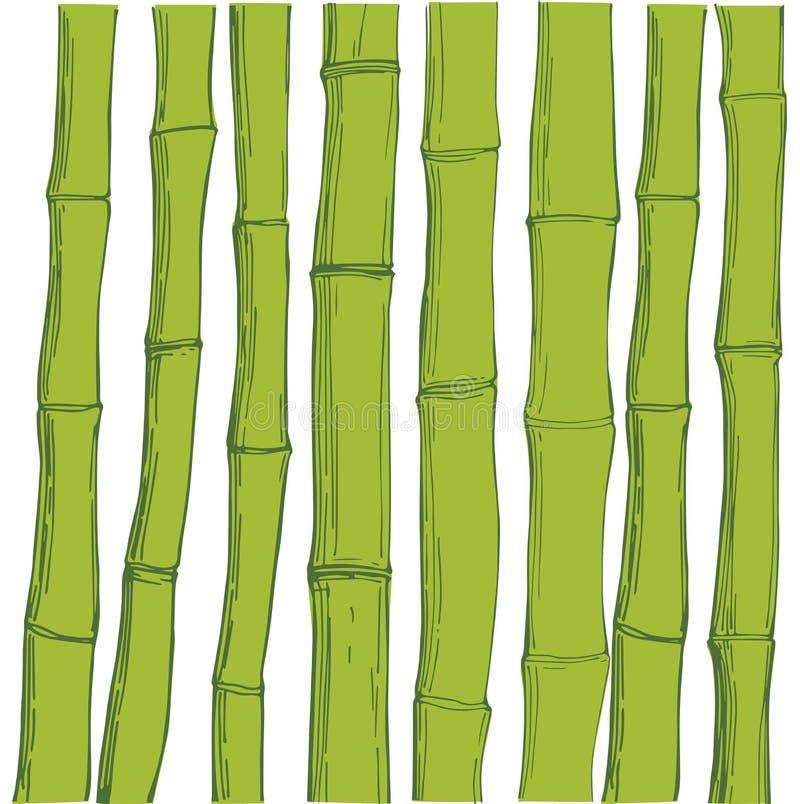 Zielony bambus Wektorowa nakreślenie ilustracja ilustracja wektor