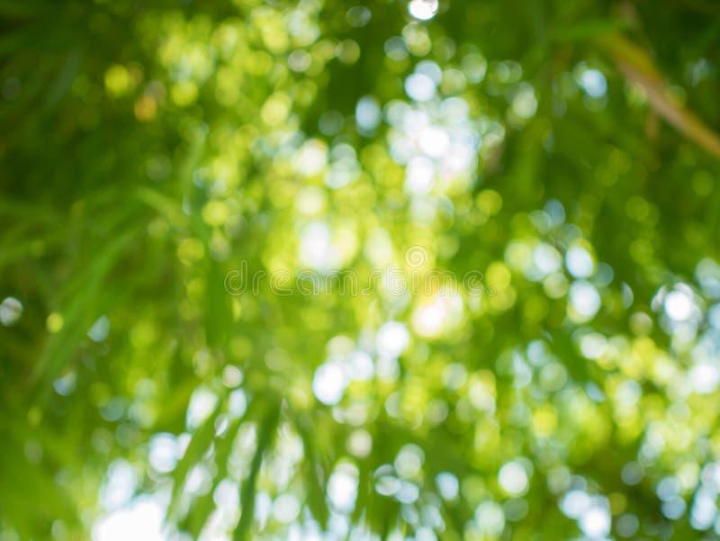 Zielony bambusowy bokeh w tle obraz stock