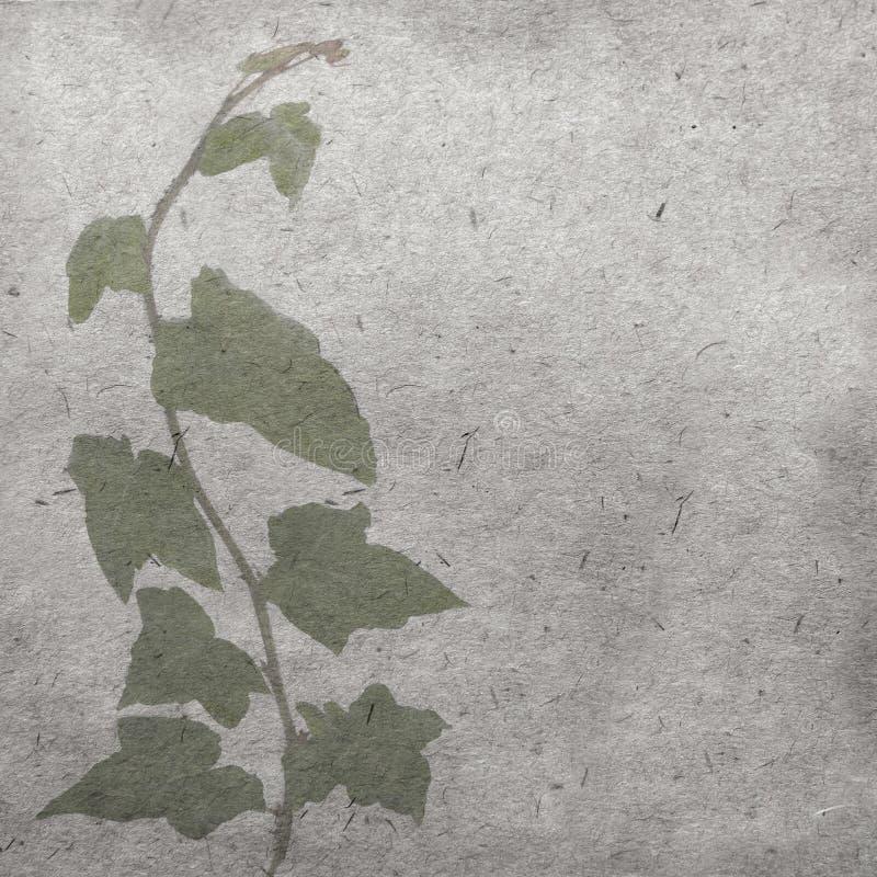 Zielony bluszcz na starej grunge antyka papieru teksturze fotografia royalty free