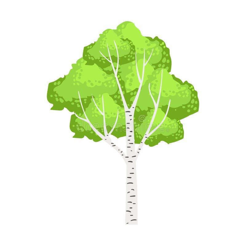 Zielony brzozy drzewo Kolorowa kreskówka wektoru ilustracja ilustracji