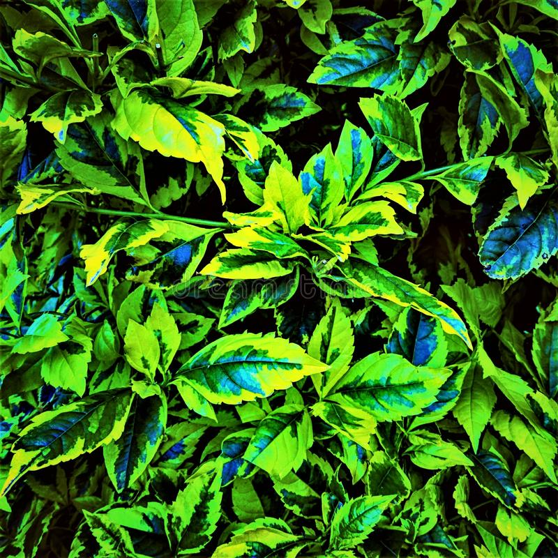 Zielony chaos obrazy royalty free
