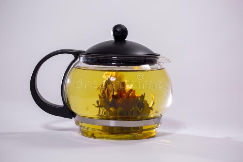 Zielony Chiński herbaciany kwiatu pączka kwitnienie w szklanym teapot Na białym tle zdjęcia stock