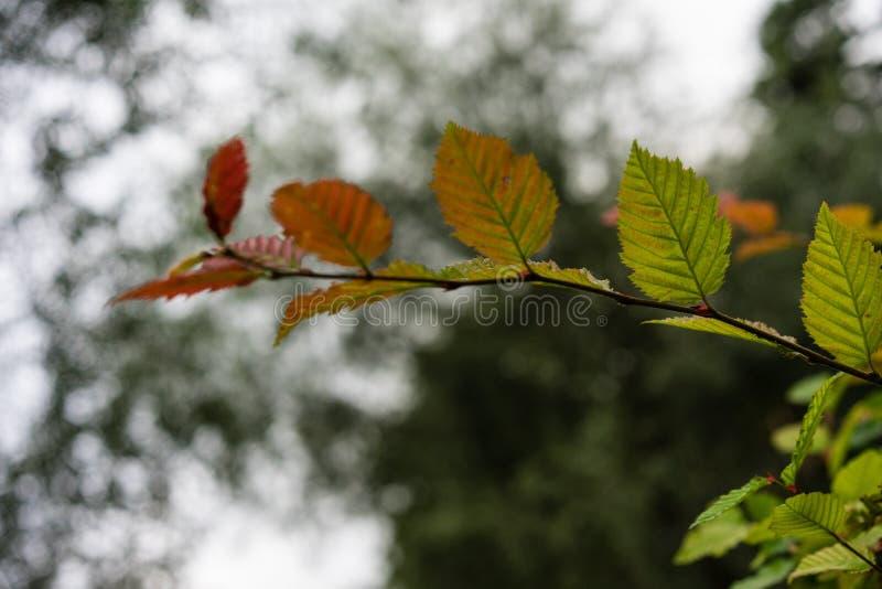 Zielony czerwony liścia bocznego widoku zakończenie up w ogrodowym tła i zmroku niebie fotografia stock