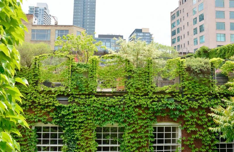 zielony dach fotografia stock