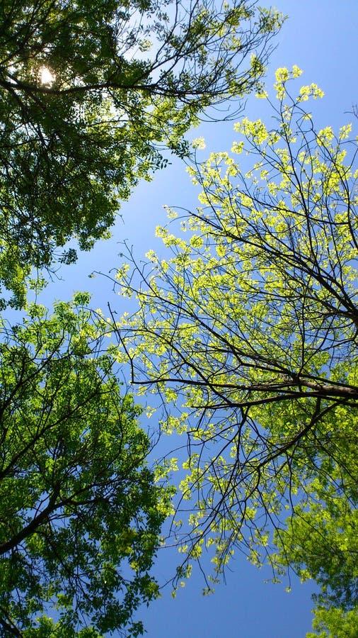 Zielony dach fotografia royalty free