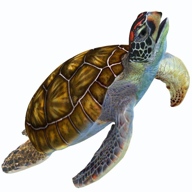 Zielony Dennego żółwia profil ilustracji