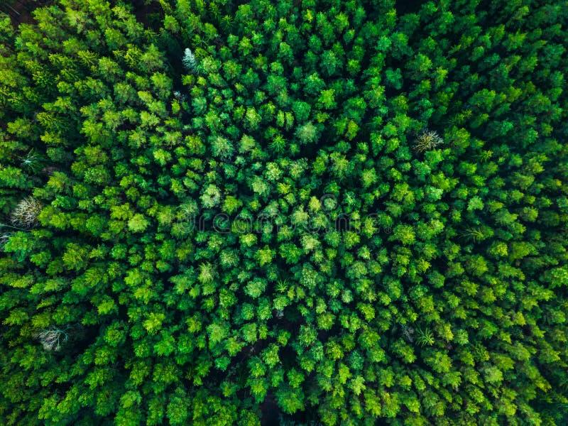 Download Zielony Drzewa Tło W Lithuania, Europa Obraz Stock - Obraz złożonej z teren, świeży: 106920447