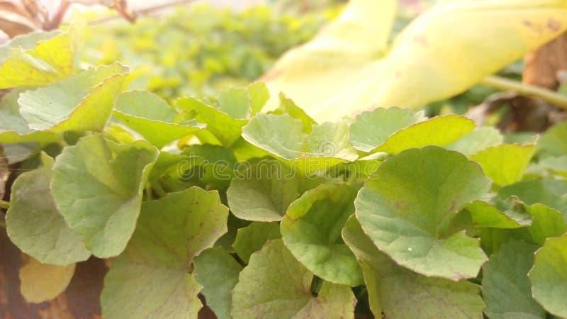 Zielony drzewny liść fotografia stock