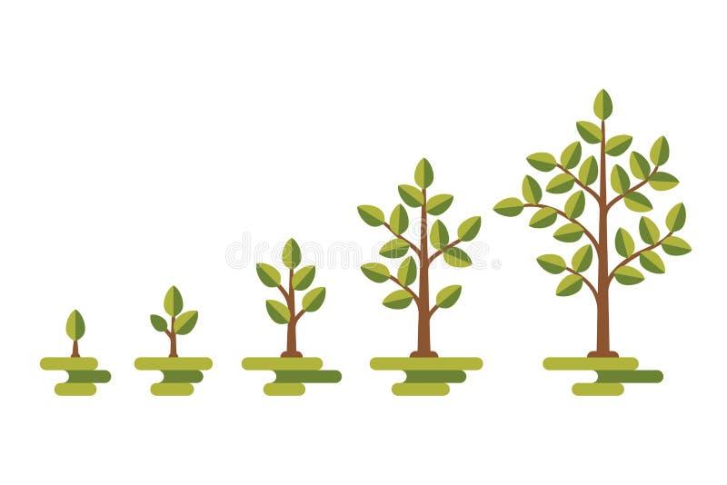 Zielony drzewny wzrostowy wektorowy diagram royalty ilustracja