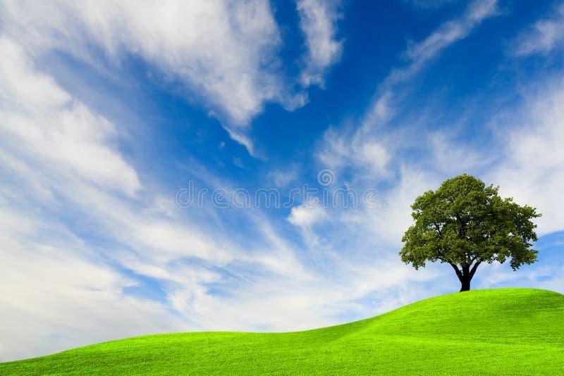 Download Zielony drzewo zdjęcie stock. Obraz złożonej z panoramiczny - 13332784