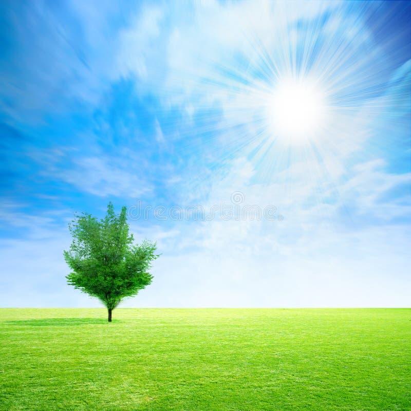 zielony drzewo ilustracji
