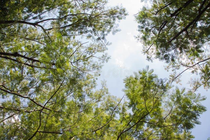 Zielony drzewo baldachim zdjęcia stock