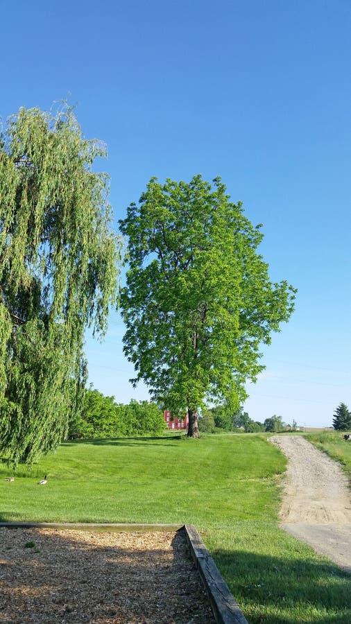 Zielony drzewo na wiejskiej drodze z niebieskim niebem w tle, spokojna natury scena zdjęcie stock
