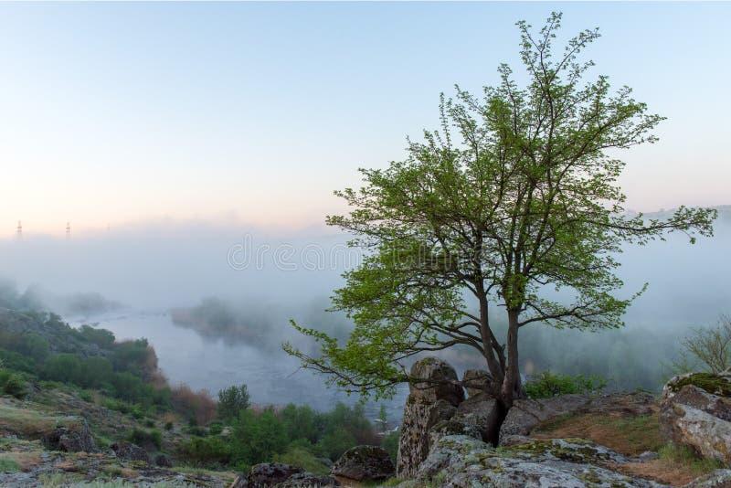 Zielony drzewo nad mglistym jarem, rzeką i kamieniami, zdjęcie royalty free