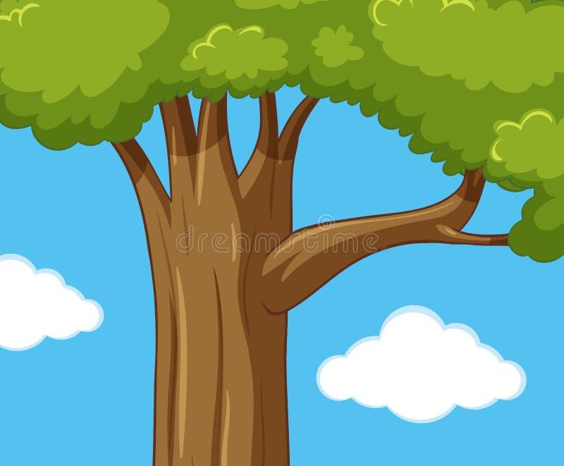 Zielony drzewo przy dnia czasem royalty ilustracja