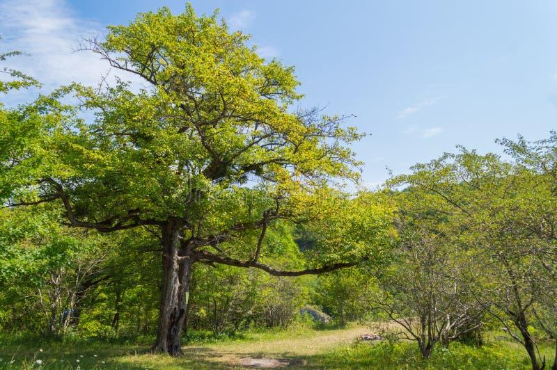 Zielony drzewo stoi blisko śladów fotografia royalty free