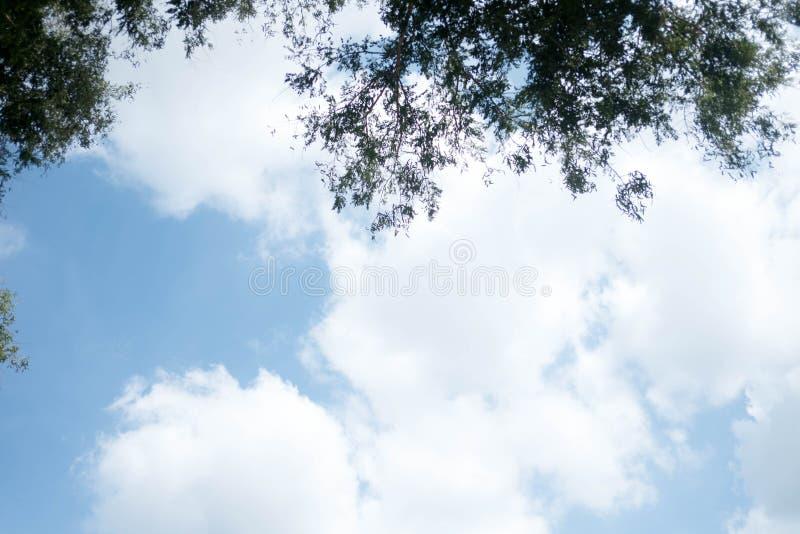 Zielony drzewo wierzchołek w lasowym niebieskim niebie i słońcu promienieje jaśnienie przez liści fotografia royalty free