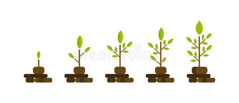Zielony drzewo z liścia przyrosta diagramem Biznesowego cyklu rozwój, inwestycja ilustracji