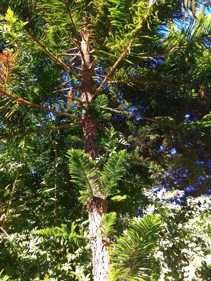 Zielony drzewo z wielkim słońcem i gołąbką zdjęcia royalty free