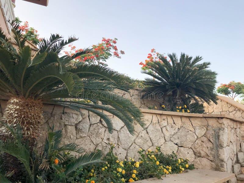 Zielony duży piękny egzotyczny tropikalny drzewko palmowe i rośliny, kwiaty na tle ściana piękny naturalny stary stary shrewde obrazy stock